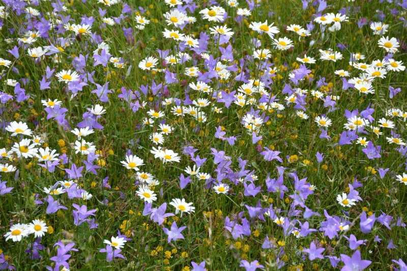 Пролетна поляна край Заград.